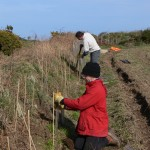Planting hedges at Le Don Hodges. Photo by Cris Sellares