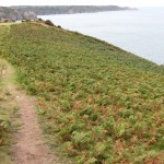 Bracken on north coast. Photo by National Trust for Jersey