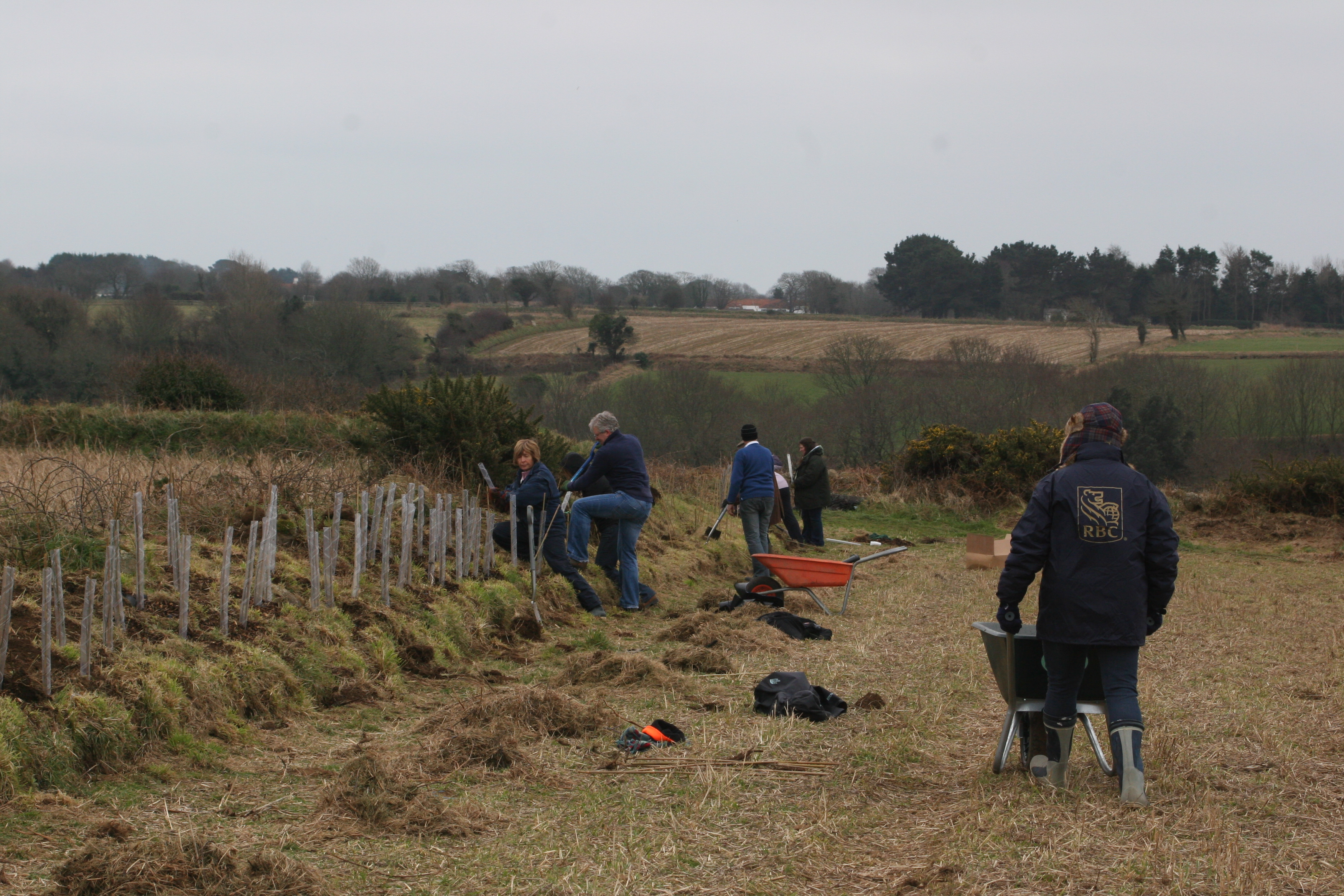 Planting hedges at Le Don Hodges 2013. Photo by Cris Sellares