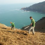 Bracken clearance on north coast. Photo by National Trust for Jersey
