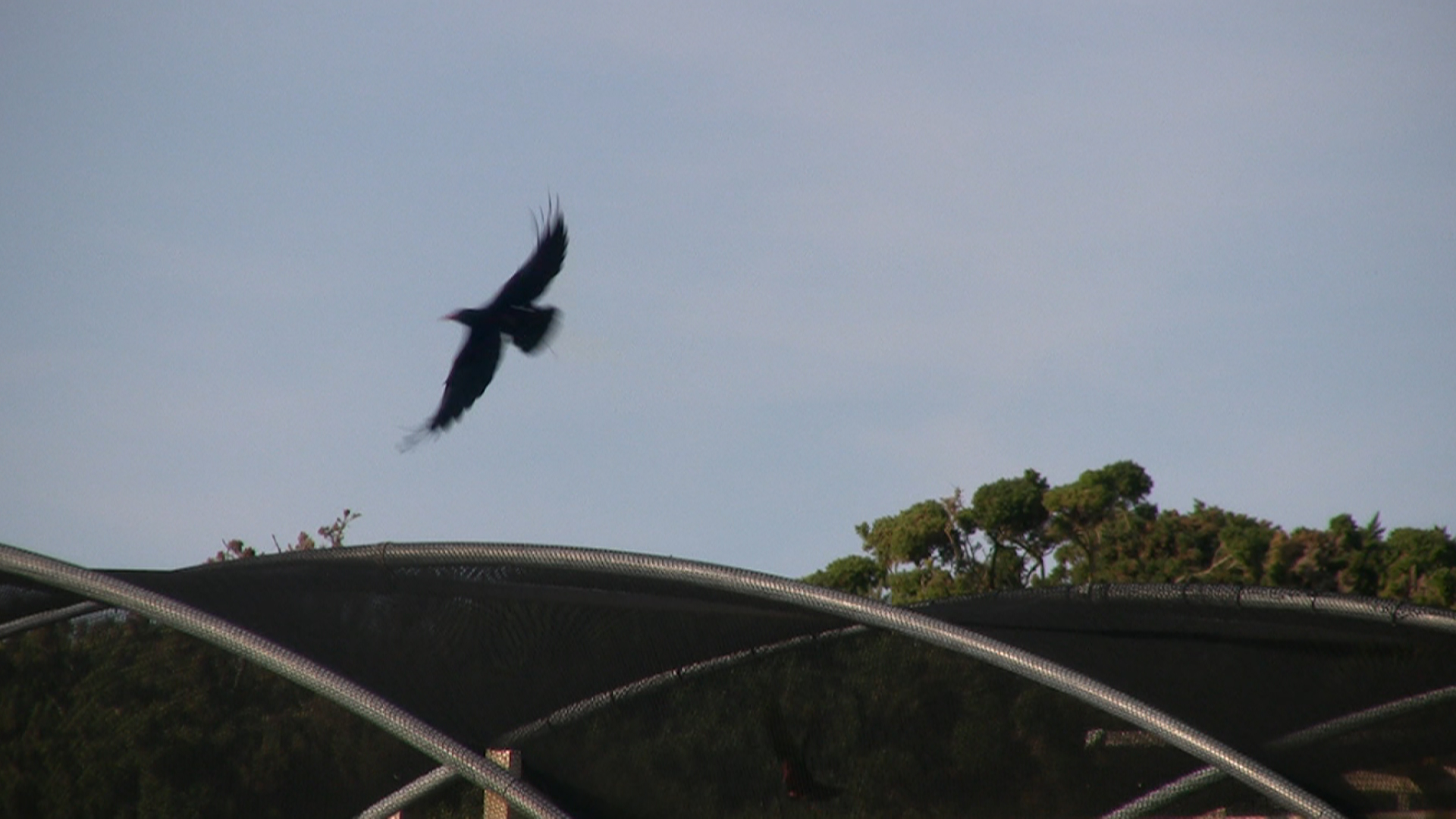 Maiden flight of green. Photo by Annette Lowe
