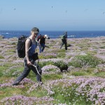 Annet seabird surveys. Photo courtesy of ISSRP