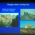 Chough roost sites in Spain