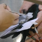 Radio transmitters and ID rings were added to those birds that needed them. Photo by Liz Corry