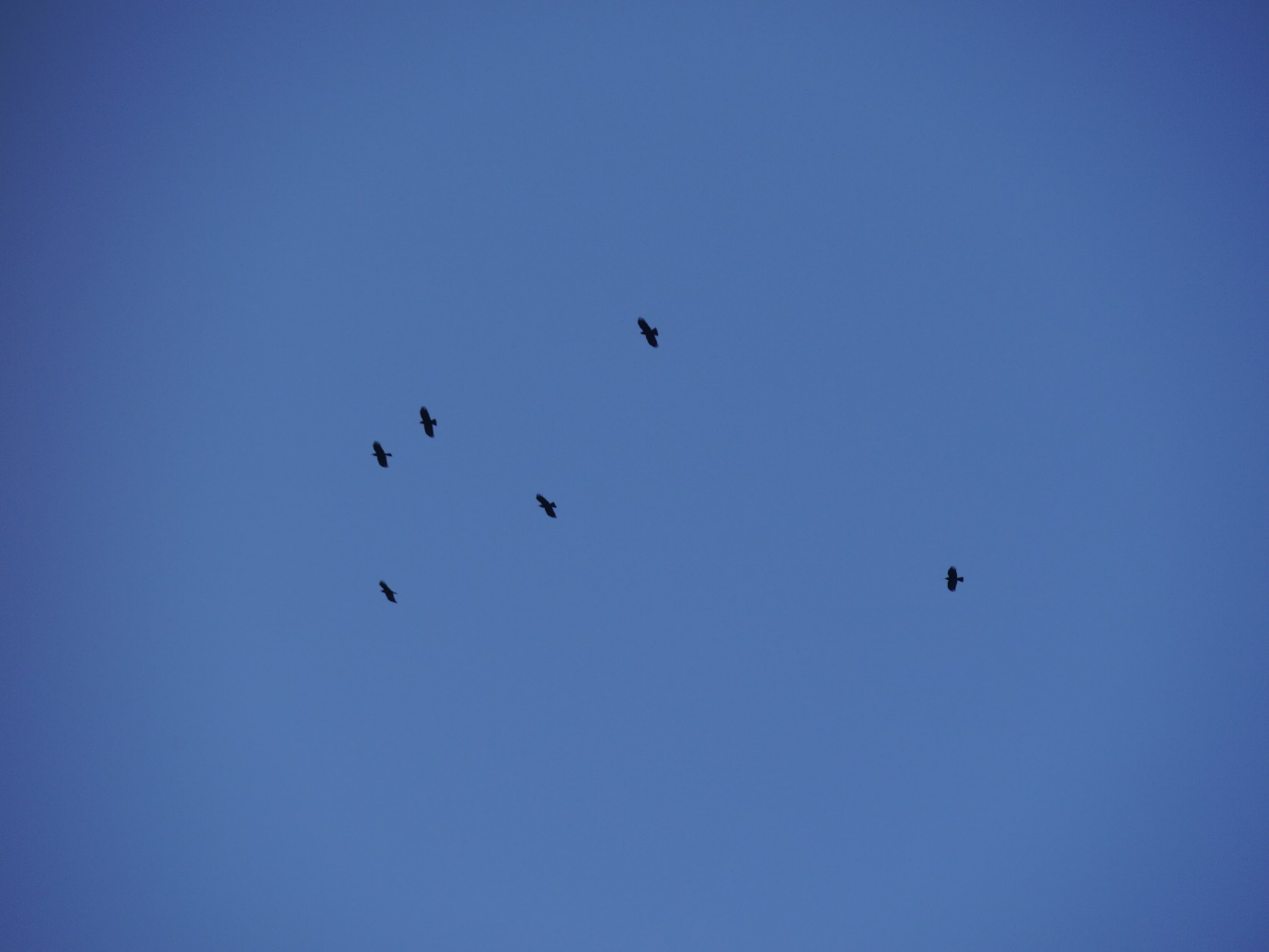 Green, Mauve, Blue, Black, Red, and White flying free above Sorel in April 2014. Photo by Liz Corry