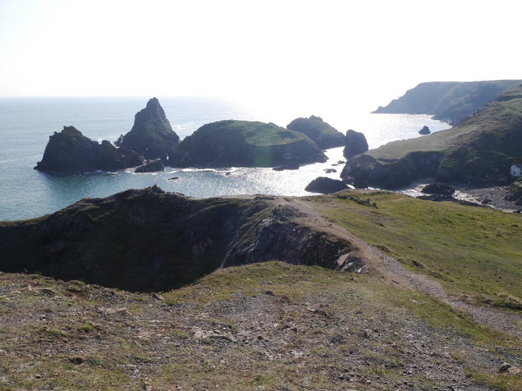 Chough habitat at Kynance, Cornwall. Photo by Liz Corry