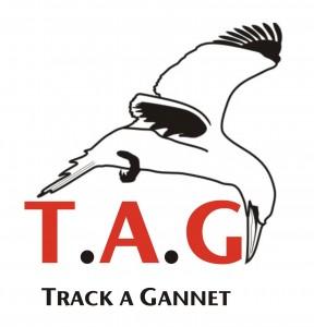free flying gannet