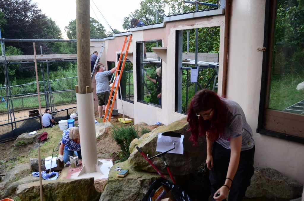 Staff and volunteers and Durrell help with the display aviary renovations. Photo by Jonathan Stark.