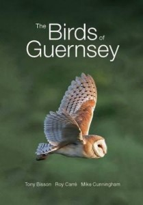 birds-of-guernsey