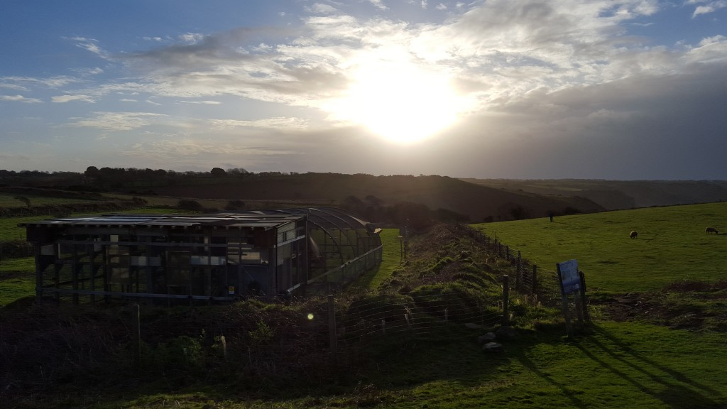 Sun beginning to set over the release aviary on the last day of 2015. Photo by Liz Corry.