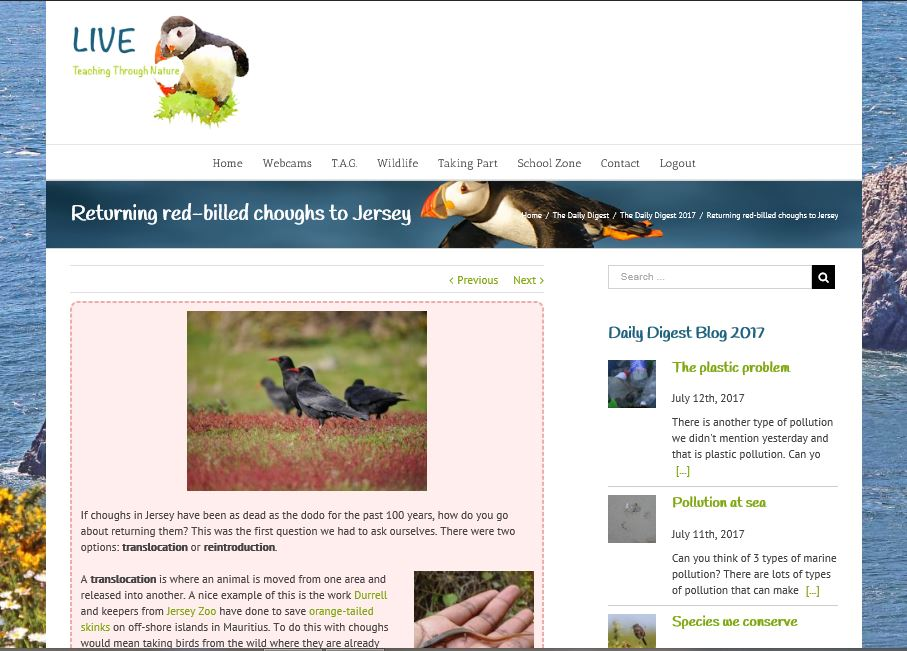 LIVE screen grab choughs