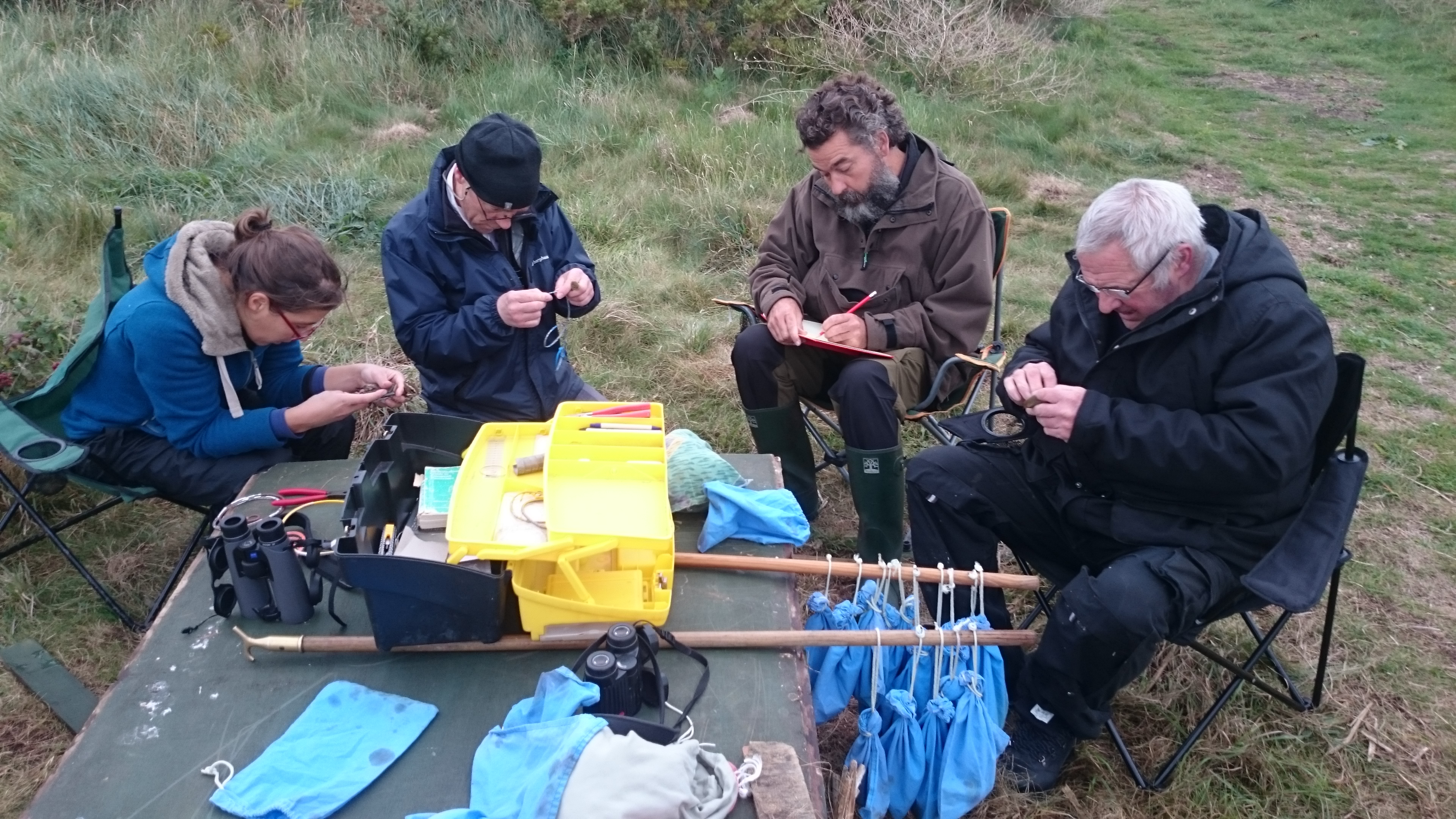 CI bird ringers in action. Alderney ABO conference 8-9 October 2016. Photo by HGYoung (23)
