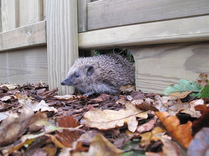 Hedgehog gravel board. Photo by Jacksons Fencing