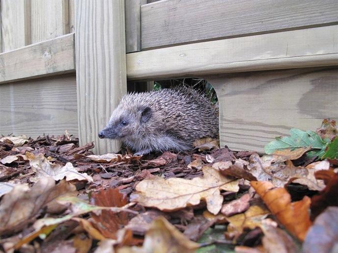 Hedgehog gravel board. Photo by Jacksons Fencing
