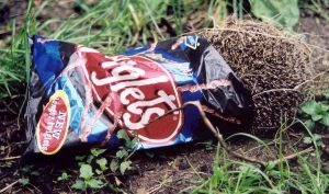Hedgehogs in the Twiglets. Photo by Dru Burdon